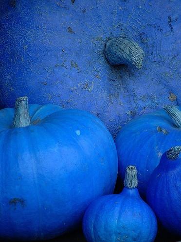 Oilbac-blue pumpkin