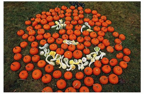 many pumpkins
