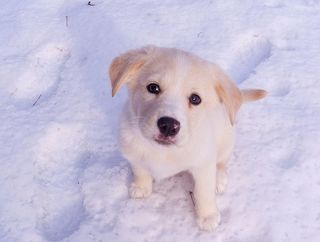 Ella the snow dog--jpctalbot