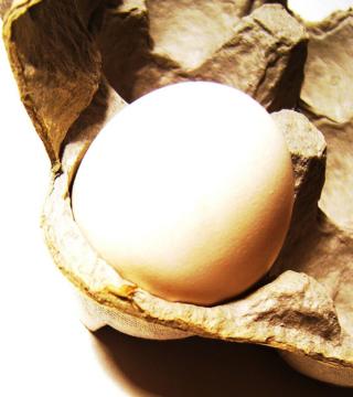 Got eggs photo by Darwin Bell