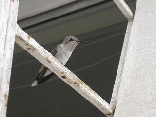 Bird-mariowsm