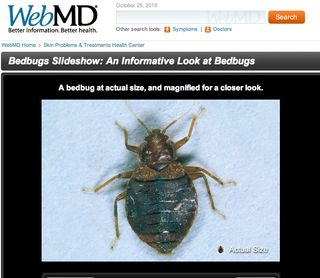 Bed bug photo from WebMD