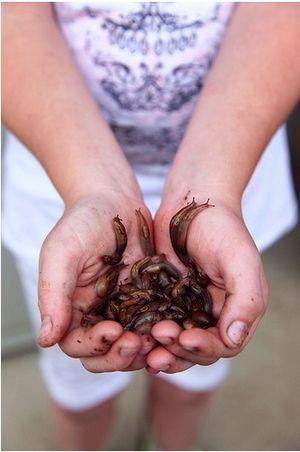 Kid with handful of garden slugs