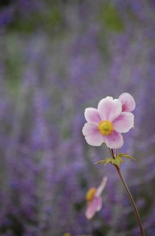 Flowerbystrife