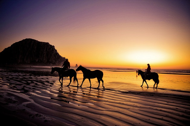 Beach horse-tbchris