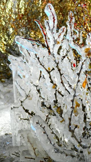 photo of icy branches in winter by Chris Olson