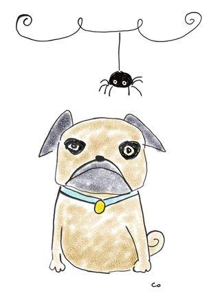 Pug w spider jpg