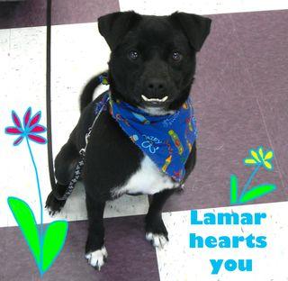 Adopt Lamar