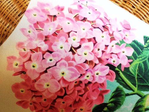 Pink Hydrangea gift box--printable