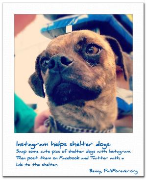 Instagram helps shelter dogs