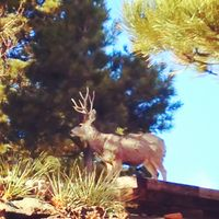 Instagram deer photo