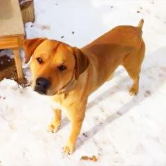 Oscar--shelter dog