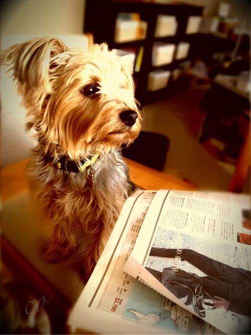 Dog at breakfast table via momathonblog