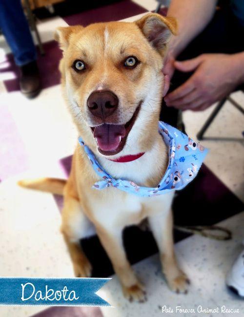 Shelter dog of the week: Dakota