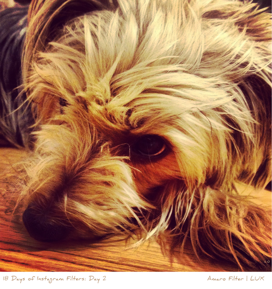 18 Days of Instagram Filters: Day 2, Amaro
