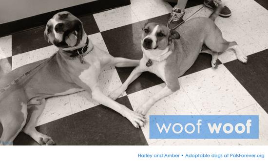 Harley & Amber, Adoptable dogs at PalsForever.org