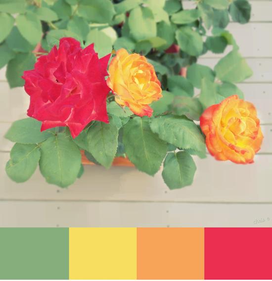 I heart some flower drama: roses