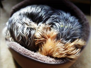 Dog photo by Chris Olson
