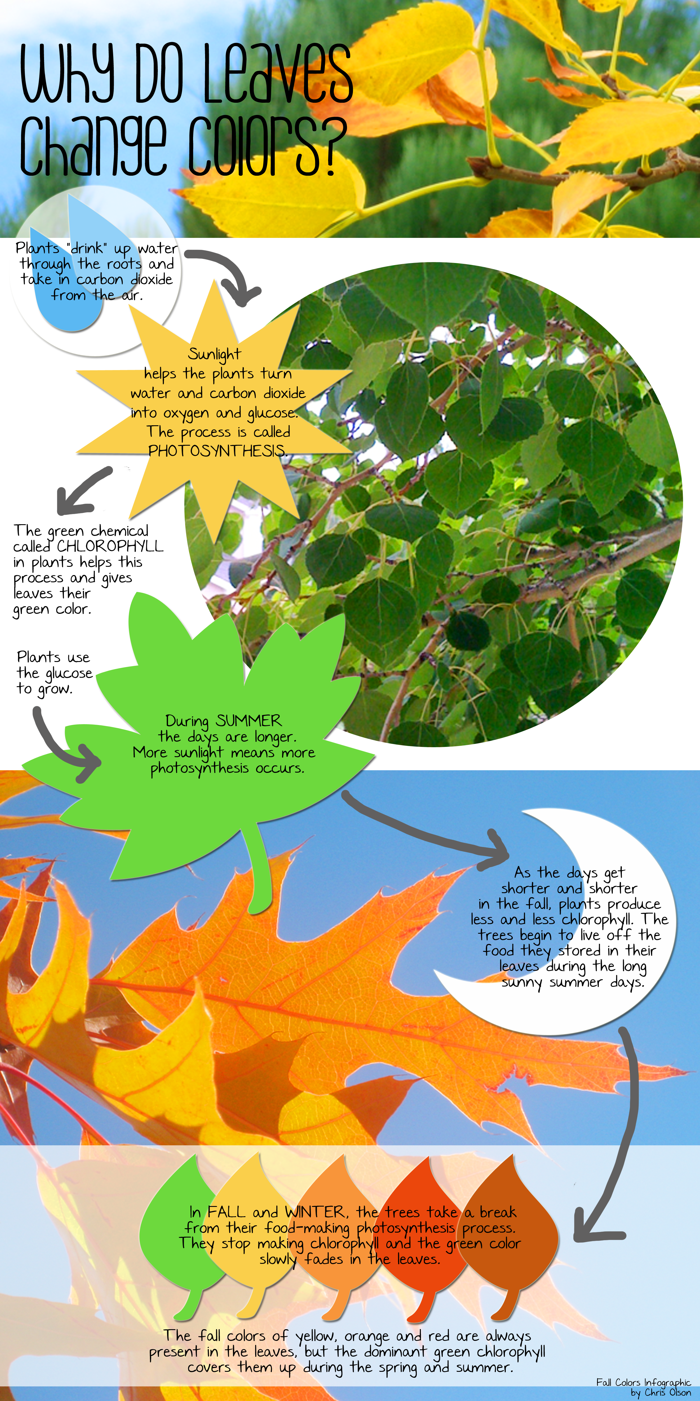 Momathon Blog: Why Do Leaves Change Colors in Fall?