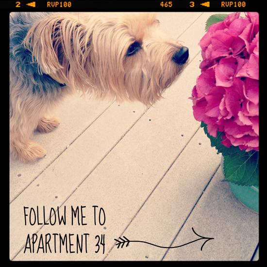 Guest_post_Apartment_34