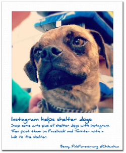 Social_Media_and_Shelter_dogs
