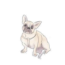 Frenchie_illustration