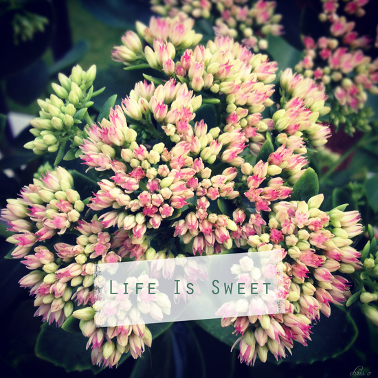 Life is sweet*