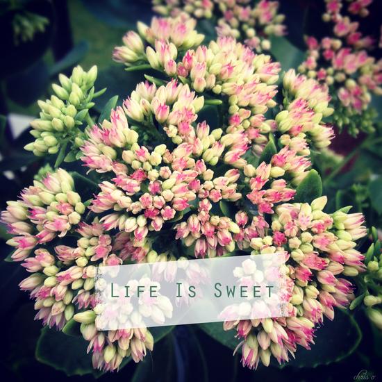 Life is sweet*