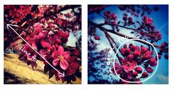 Instagram guide: using the tilt-shift focus