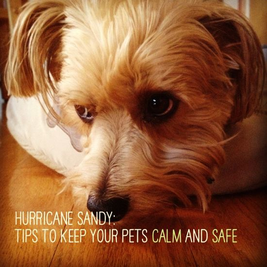Hurricane_sandy_pets
