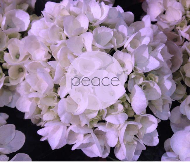 Holiday-peace