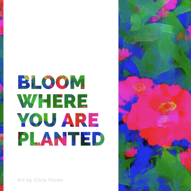 Bloom where you are planted - Inspirational Quote Art